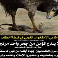 2014/04/05 | أفاعي الاستخراب الغربي في قبضة العقاب!